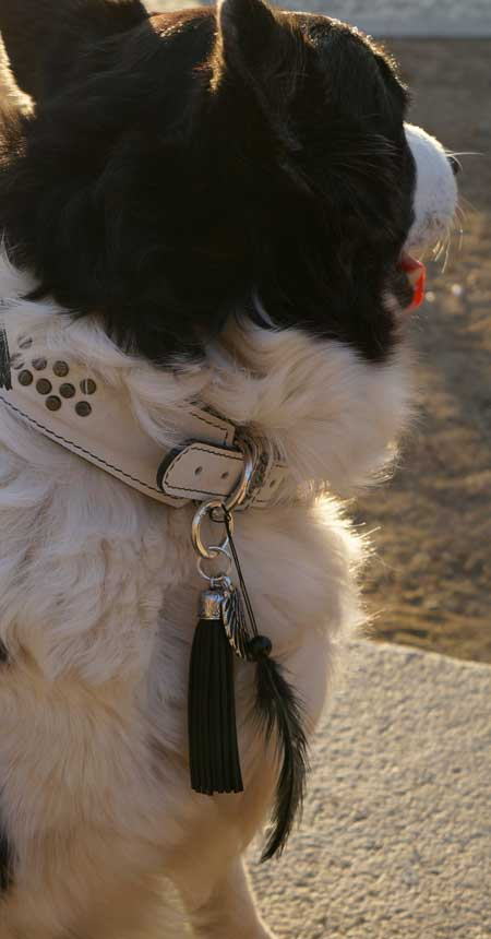 dog collar leather | Nappa with studs | let's do
